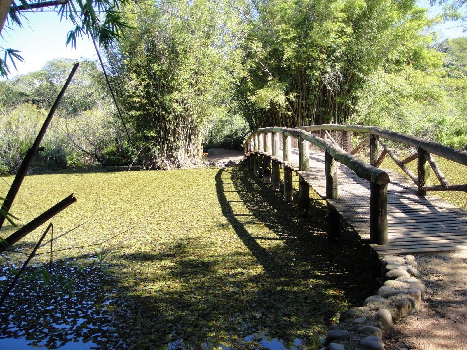 fotos jardim botanico porto alegre : fotos jardim botanico porto alegre:jardim botanico